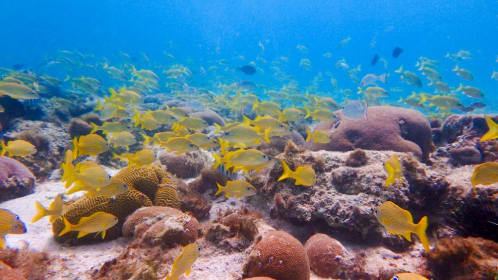 Underwater world with yellow fish at Aruba