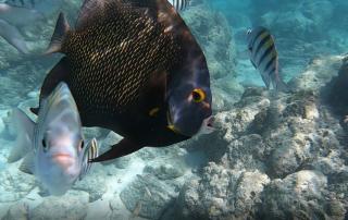 Snorkeling Cruise Aruba explore the Caribbean Sea
