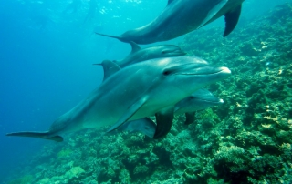 Dolphins in Aruba will follow the Octopus catamaran